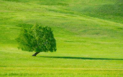 Zašto je trava zelena